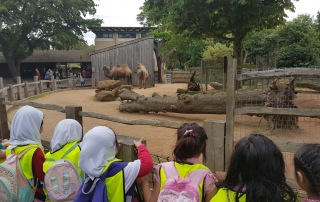 QIGS KS1 Trip to ZSL London Zoo