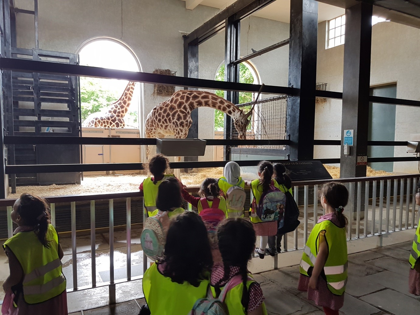 QIGS KS1 Trip to ZSL London Zoo